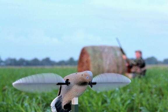 The package of 2018-19 hunting and fishing regulations the TPW Commission cleared for final adoption includes a Sept. 14 opening of the general dove season in Texas' South Zone. It will be the earliest opening day of the season in the state's most dove-rich region since at least 1940.