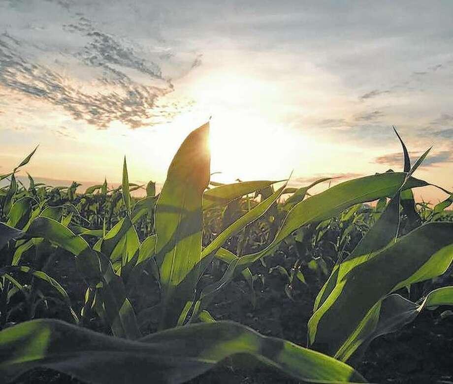 The sun sets over a Morgan County cornfield.