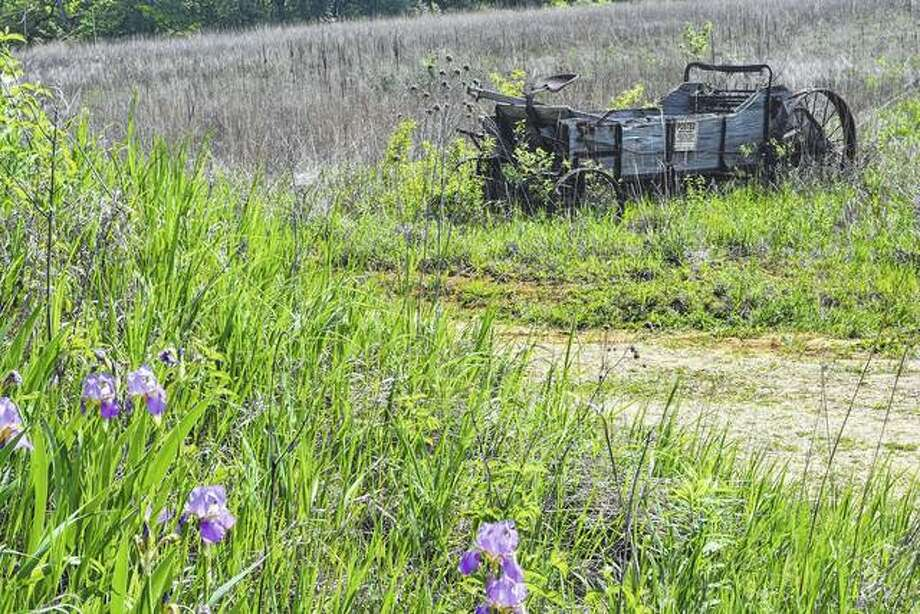 The new growth of flowers and grass blends with an old wagon in a field.