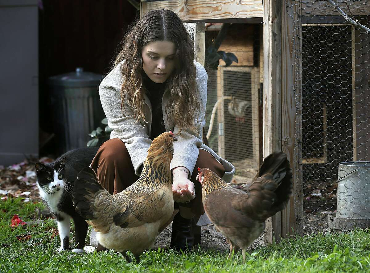 Lauren Tackberry feeds the chickens accompanied by her cat Reverend in the yard at home on Thursday, February 22, 2018, in Berkeley, Calif.