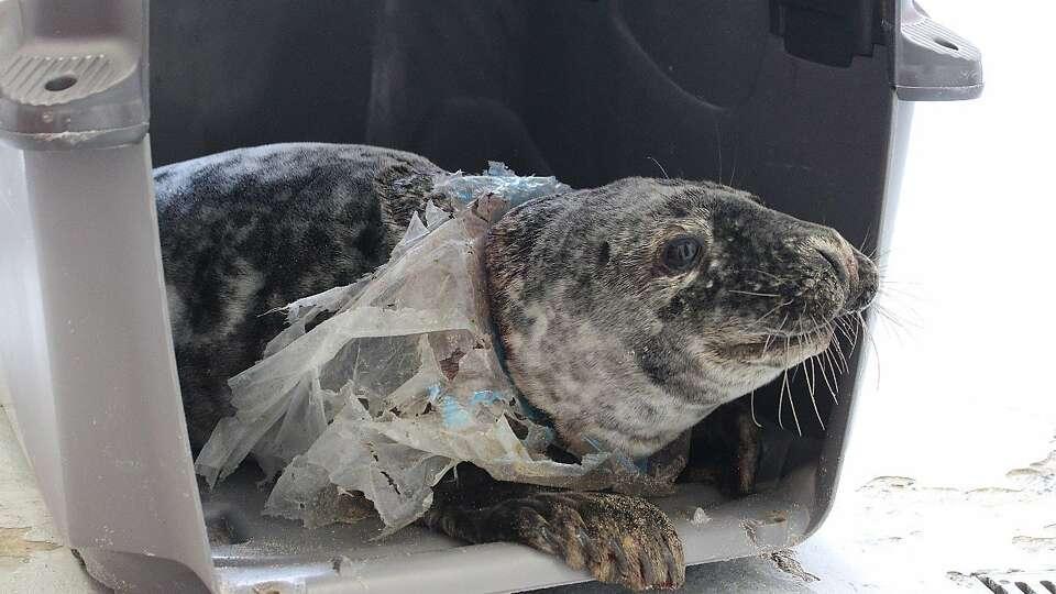 Plastic garbage poses major threat to marine life