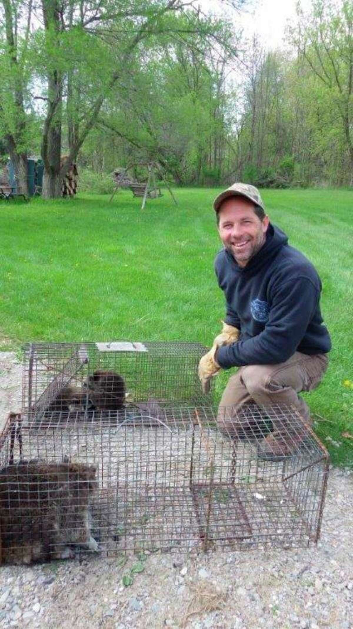Chad Seleyshows a family of raccoons that he live-trapped in amunicipal building. (Tom Lounsbury/Hearst Michigan)