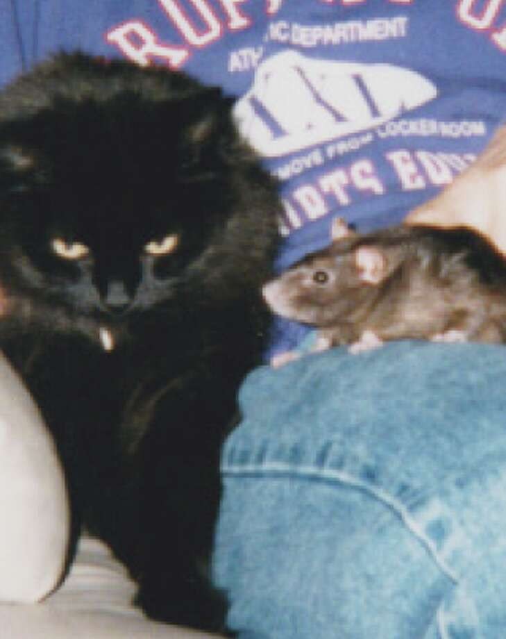 Pets remembered: LD (Little Devil) and Missy (Rat)