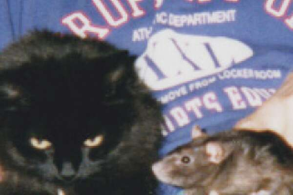 LD (Little Devil) and Missy (Rat)