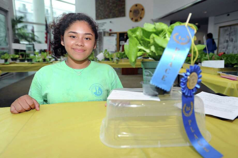 Greissy Najera Co, 13, next to her first prize lettuce before a ceremony recognizing the participants of the 2018 Lettuce Challenge. Photo: Michael Cummo / Hearst Connecticut Media / Stamford Advocate