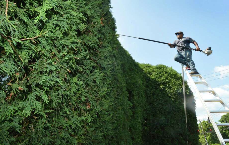 A Damato Landscaping employee trims hedges in July 2017 on Van Buren Ave. in Norwalk, Conn. Damato was among a plethora of landscaping services companies to file papers of incorporation in the past decade in Norwalk, among the city's most active sectors for entrepreneurship along with painters and cleaning services companies. Photo: Alex Von Kleydorff / Hearst Connecticut Media / Norwalk Hour