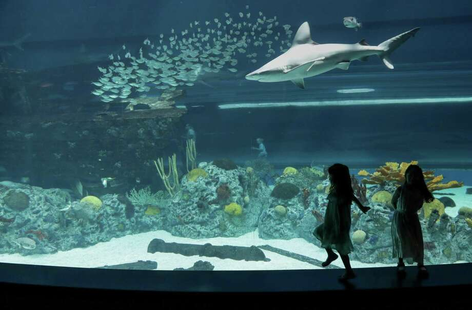Elsee O'Donnell, 5, and her identical-twin sister Willow, dance along a ledge at the Texas State Aquarium Wednesday, May 2, 2018, in Corpus Christi. Photo: Jon Shapley, Houston Chronicle / Houston Chronicle / © 2018 Houston Chronicle