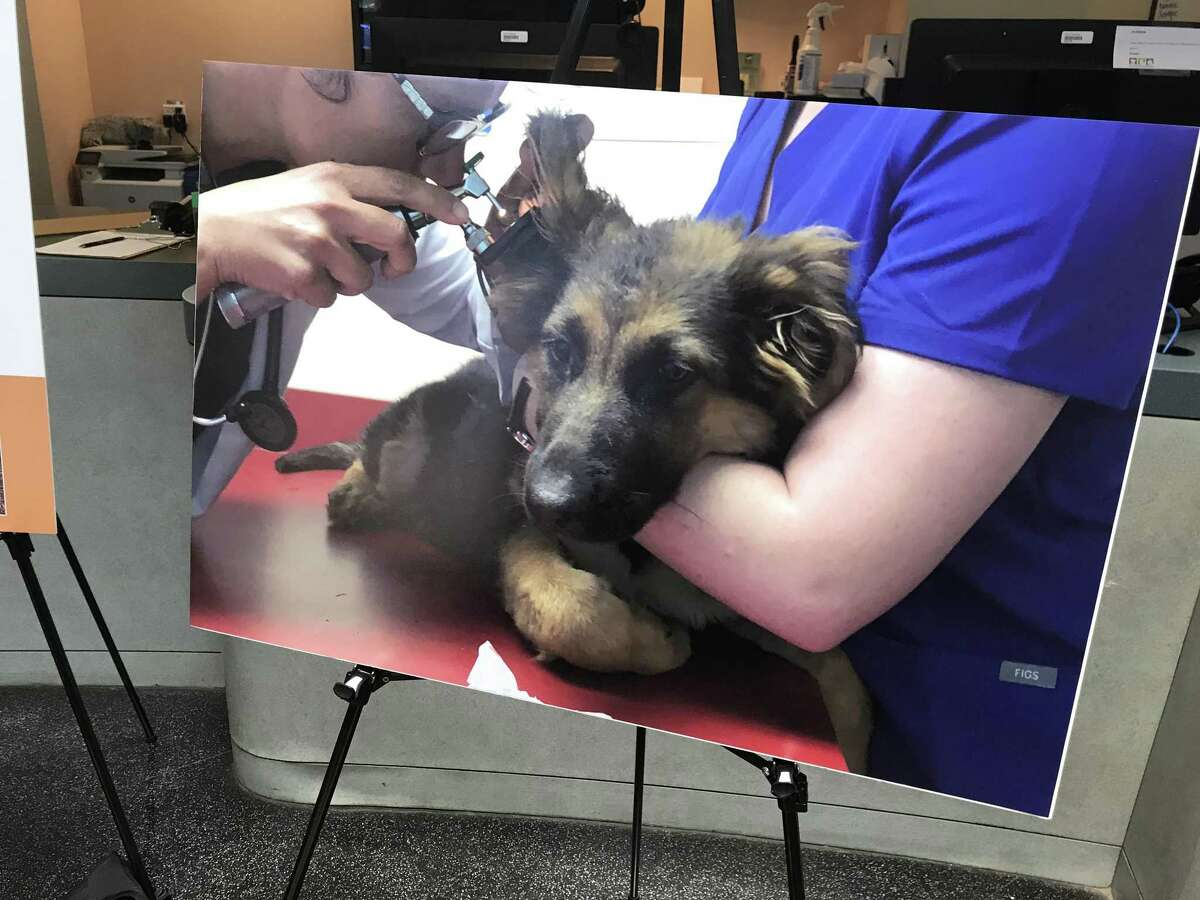 Alameda County District Attorney Nancy O'Malley asked for the public's help on Friday in tracking down whoever tortured and mutilated three puppies in Oakland.