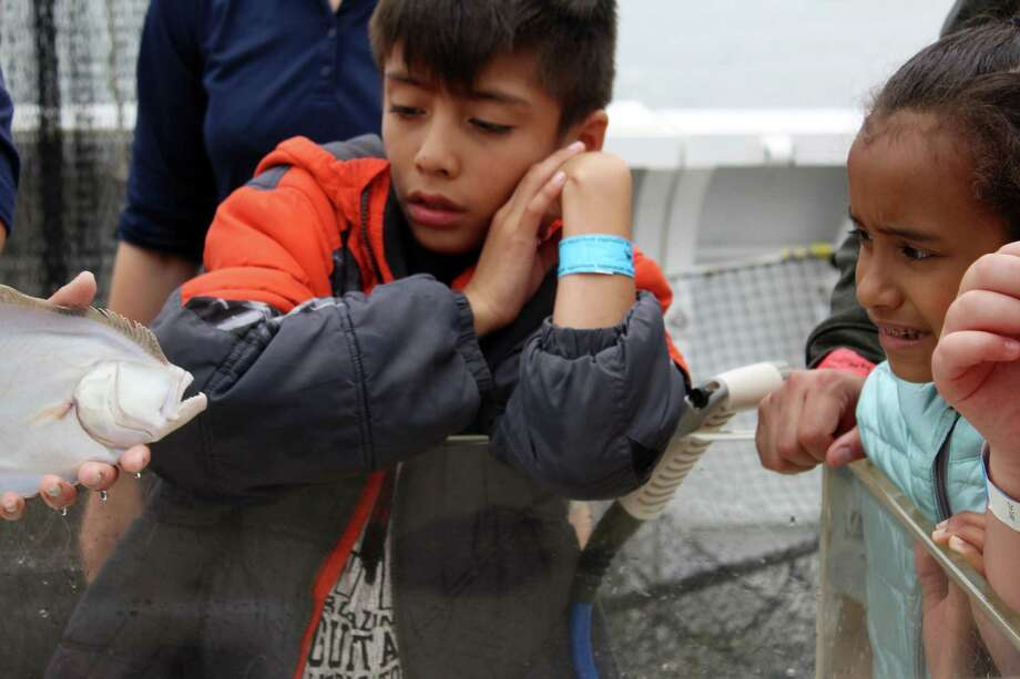 Third-graders from Brookside Elementary School look at a fish's teeth during a marine life study cruise with Maritime Aquarium on Friday, June 1, 2018. Photo: Stephanie Kim / Hearst Connecticut Media