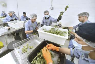 West Haven-based marijuana company to be acquired by large