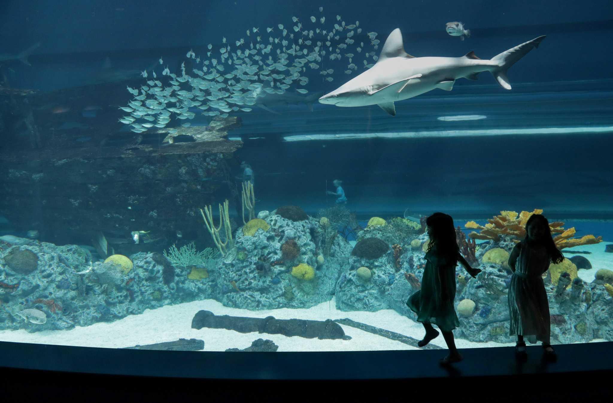 Design Aquarium Kast : Texas state aquarium doubles down on wildlife rescue
