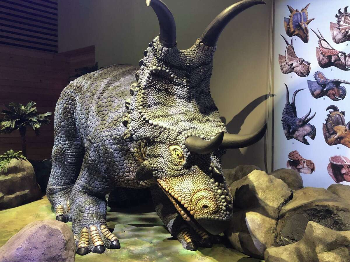 """An animatronic Diabloceratops is among the creatures spotlighted in """"Predators vs. Prey: Dinosaurs on the Land Before Texas,"""" the big summer show at the Witte Museum. The """"diablo"""" in the name refers to the dinosaur's curving horns."""