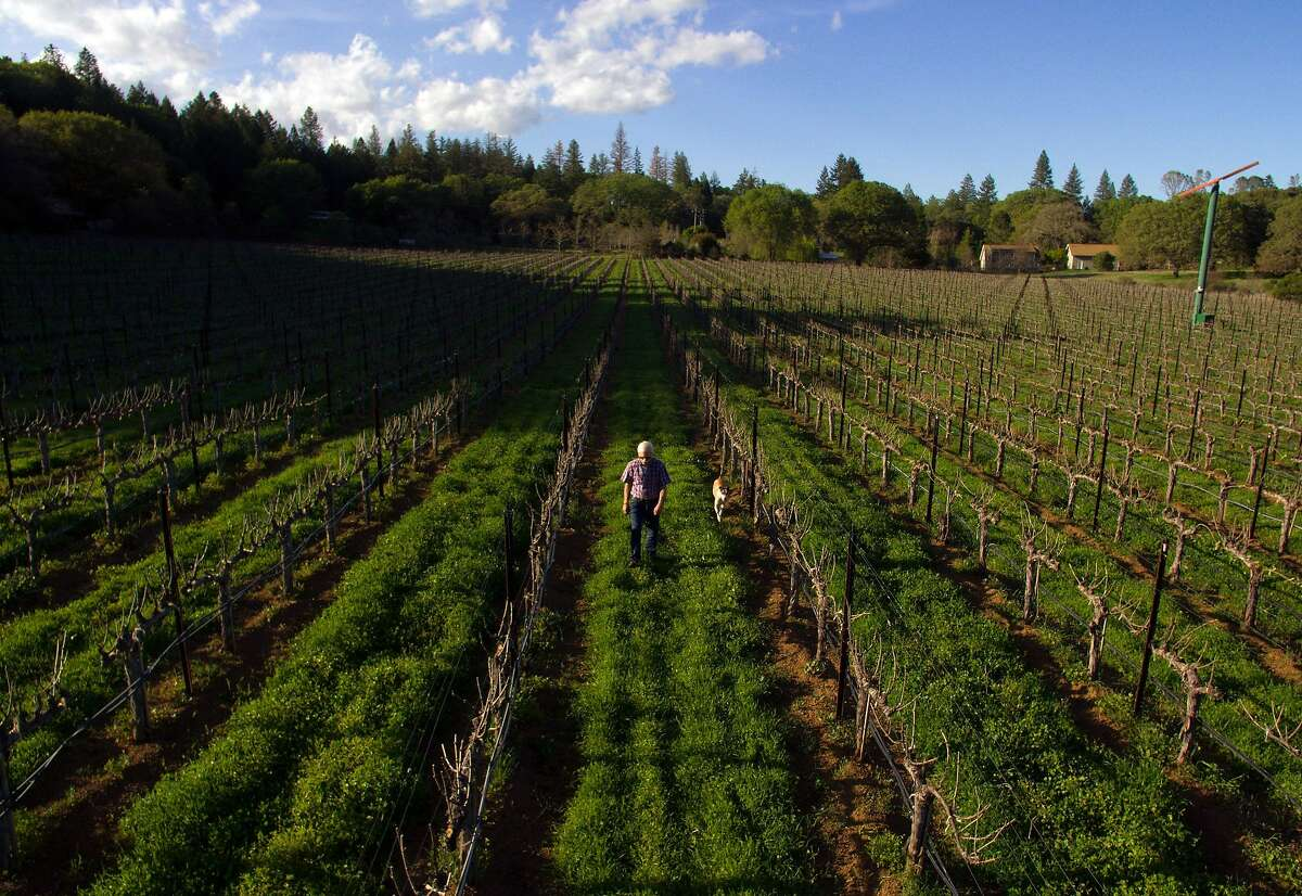 Randy Dunn with his dog, Dominga at his vineyard in Napa, Calif., on Monday, April 2, 2018. There is growing debate in Napa over vineyard development, centered around an upcoming ballot initiative in which voters will decide whether to limit further vineyard plantings in the agricultural watershed, especially where there are forests. Dunn owns Dunn Vineyards on Howell Mountain, and also purchased a major nature preserve nearby called Wildlake, which he has donated to the Land Trust. He is in favor of the ballot initiative and strongly opposes further deforestation.