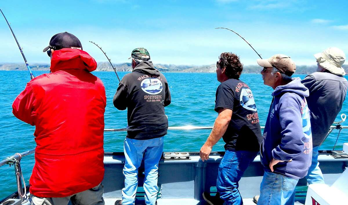 The 2018 opening day of the sport salmon season out the Golden Gate is June 17, and here three anglers on the Wacky Jacky last year hook up at once