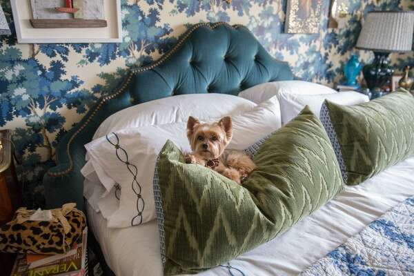 "Teddy, designer Alex Papachristidis's Yorkie, is featured in Susanna Salk's book ""At Home With Dogs and Their Designers."""