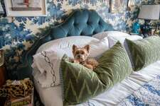 """Teddy, designer Alex Papachristidis's Yorkie, is featured in Susanna Salk's book """"At Home With Dogs and Their Designers."""""""