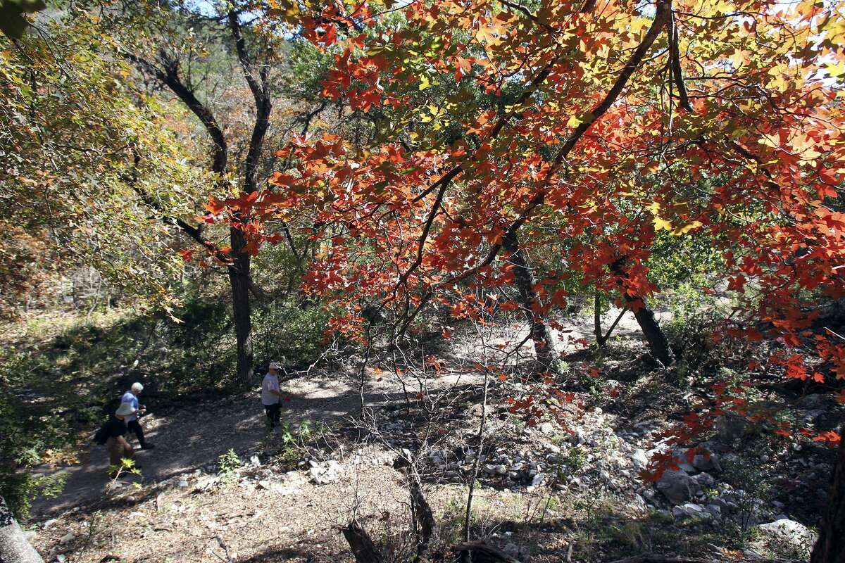 Hikers walk through a colorful area at Lost Maples State Natural Area.