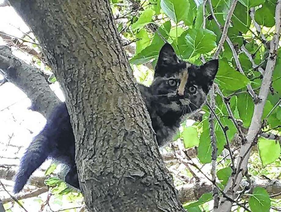 A kitten makes its way amid the branches of a tree.