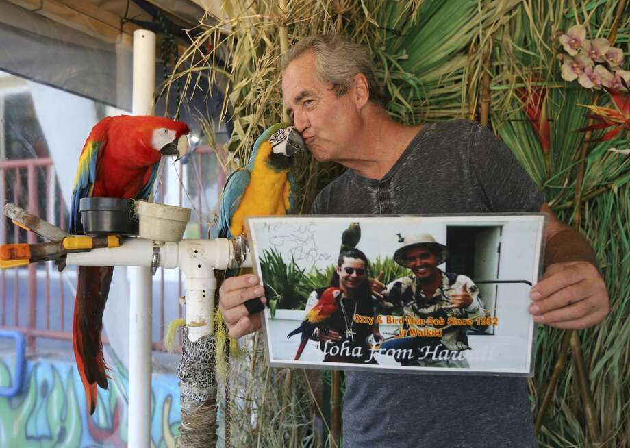 Entrepreneur Bob Nordberg plants a kiss on one of his parrots at his photo booth in Port Aransas on Saturday, May 26, 2018. Nordberg has lived in the small island town since 2006 where he photographs visitors with his parrots. Some San Antonio residents made the three-hour trek to Port Aransas to celebrate Memorial Day weekend. Since Hurricane Harvey struck the area last year, the city and business owners have been racing to recover from the devastating storm and draw tourists back to the tiny island town. City Mayor Charles R. Bujan said despite perfect conditions for the beaches and nearly all restaurants have reopened, accommodations for visitors is still only at about half of usual capacity. (Kin Man Hui/San Antonio Express-News) Photo: Kin Man Hui/San Antonio Express-News