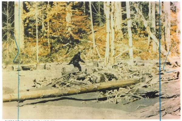 34ca435ba Gone 'squatchin': How to hunt for Bigfoot - SFChronicle.com