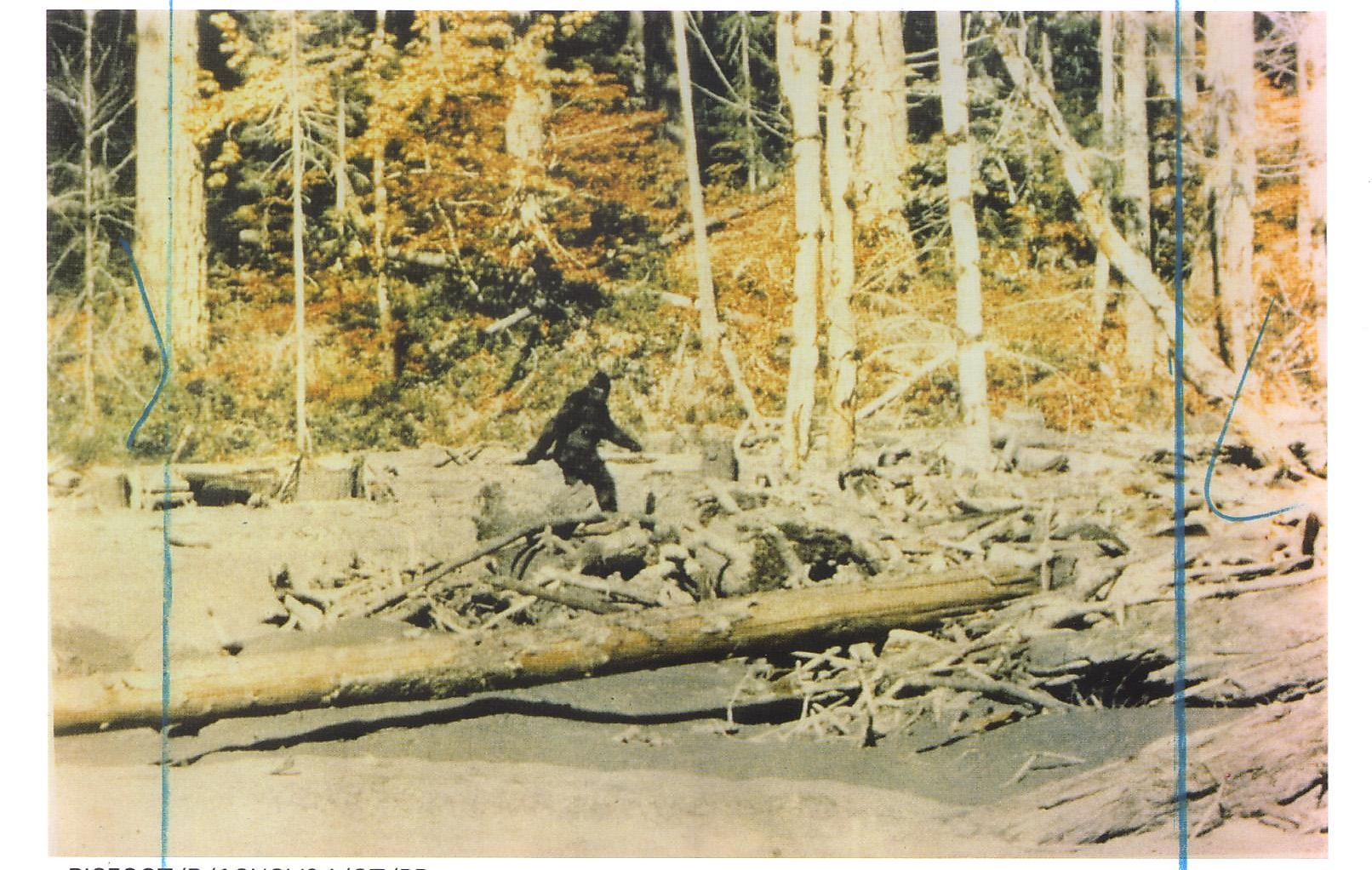 Gone  squatchin   How to hunt for Bigfoot - SFChronicle.com 3e4e02b92aaf