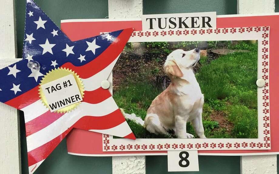 The New Milford Town Clerk has announced the winner of the fifth annual Coolest Canine contest. Tusker, whose owners are Stewart and Lynn Nicolson, is the winner. As the winner of the contest, Tusker will receive the No. 1 2018 dog tag, paid for by the Town Clerk's office. The contest recognizes June, which is dog licensing month. Residents dropped off photographs of their dog and individuals cast their votes for the winner. A display about the importance of dog licensing month is on exhibit near the entrance of Roger Sherman Town Hall at 10 Main St. Photo: Contributed Photo / Contributed Photo / The News-Times Contributed