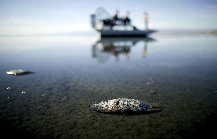 Proposition 68, which California voters passed Tuesday, will authorize $4.1 billion in bond funds for parks and environmental protection projects, including authorizing $200 million for a plan to save the Salton Sea. Photo: Gregory Bull / Associated Press