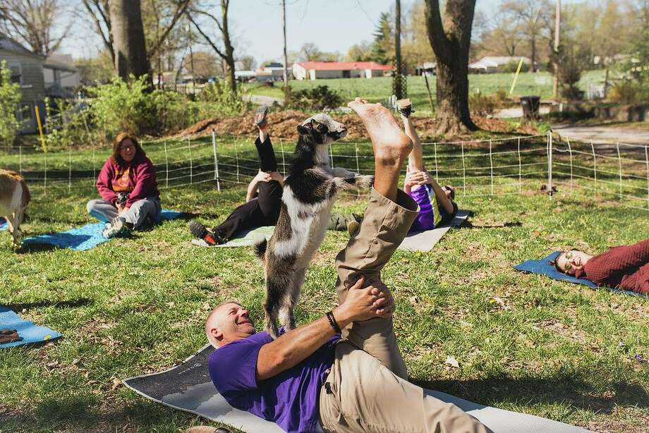 A goat joins a yoga participant during an outdoor session at Green Finned Hippy Farm Inc. near Pocahontas.