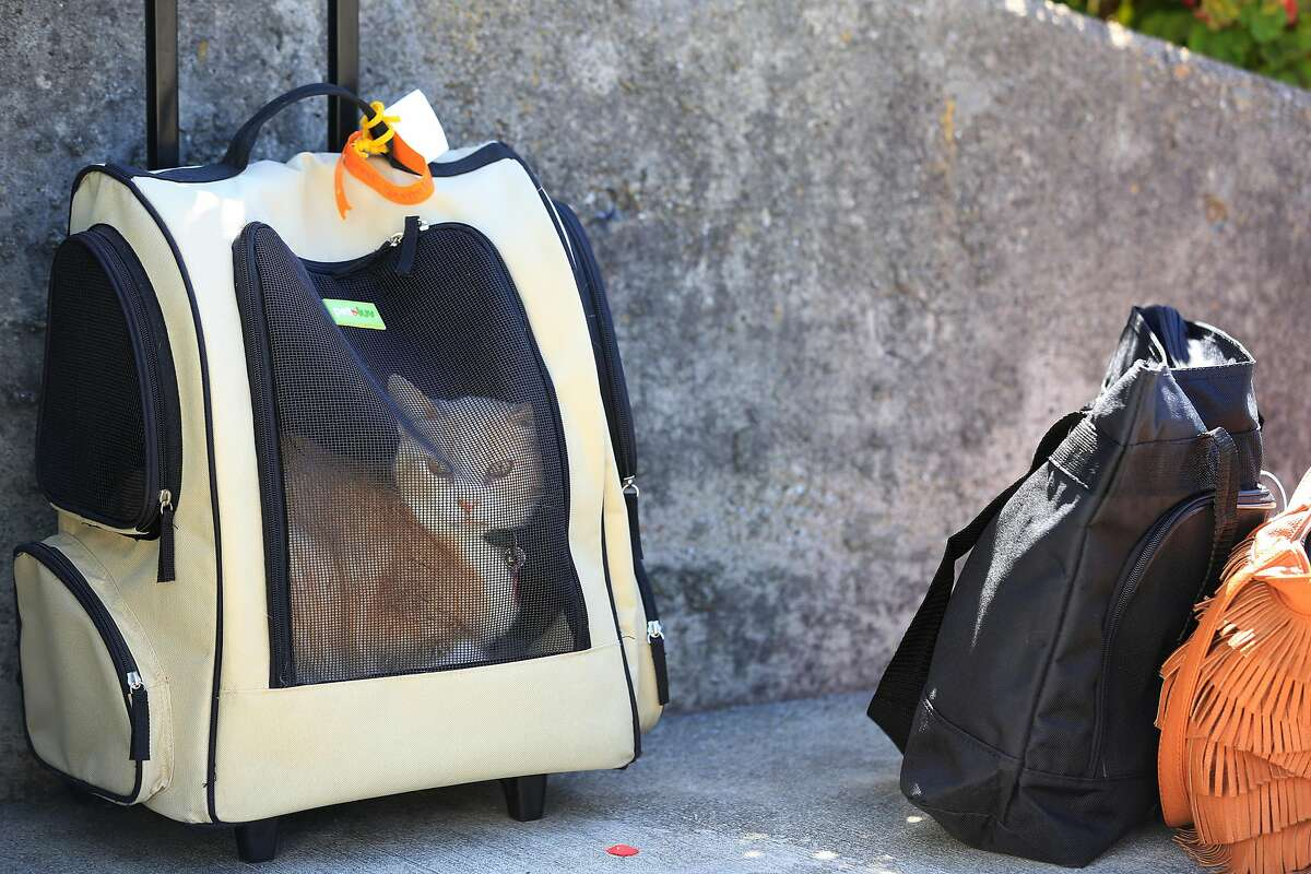 Genny Zentella's cat, Sunny, sits in a carrier next to a few belongings she was able to gather as she was removed from her home earlier in the morning on Tuesday, June 5, 2018 in San Pablo, Calif. A stay of execution had expired at 6 a.m. the day before.
