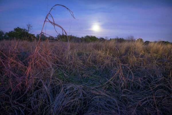 A full moon rises over a patch of winter grass at Government Canyon State Natural Area in this 2015 photo.