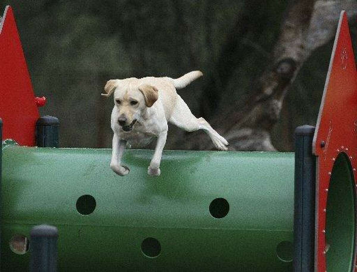 Bailey the lab jumps through hoops at McAllister Park's dog park.
