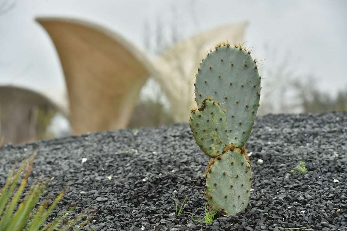 Prickly pear cactus is one of the varieties of plants at Confluence Park.