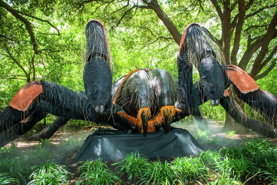 The Houston Zoos Big Bugs Exhibit Running Through The End Of Summer Offers Up