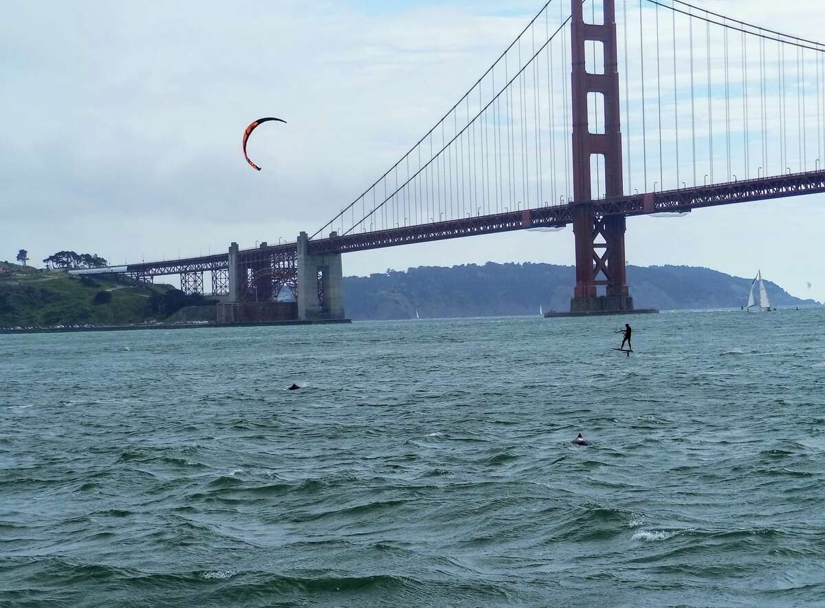 In May, San Francisco Whale Tours spotted another kite surfer moving through a pod of harbor porpoise.