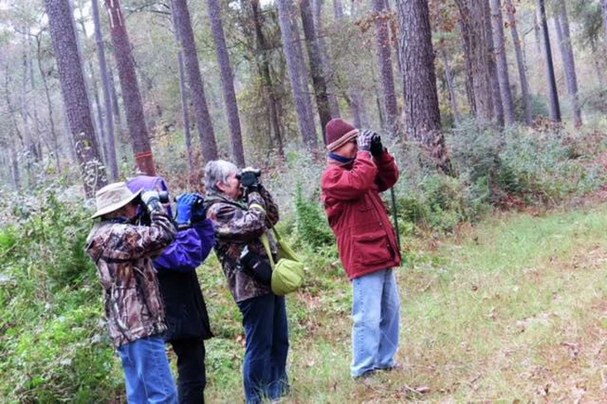 A group of bird watchers search for birds during the annual Christmas Bird Watch in Jones State Forest.