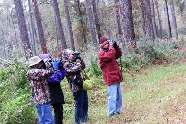 A group of bird watchers search for birds during the annual Christmas Bird Watch in Jones State Forest. Texas state Rep. Steve Toth, R-The Woodlands, and state Sen. Brandon Creighton, R-Conroe, have introduced legislation intended to prevent development with in W.G. Jones State Forest. Called the Jones Forest Preservation Act, the proposal would prohibit any residential or commercial development within the forest.