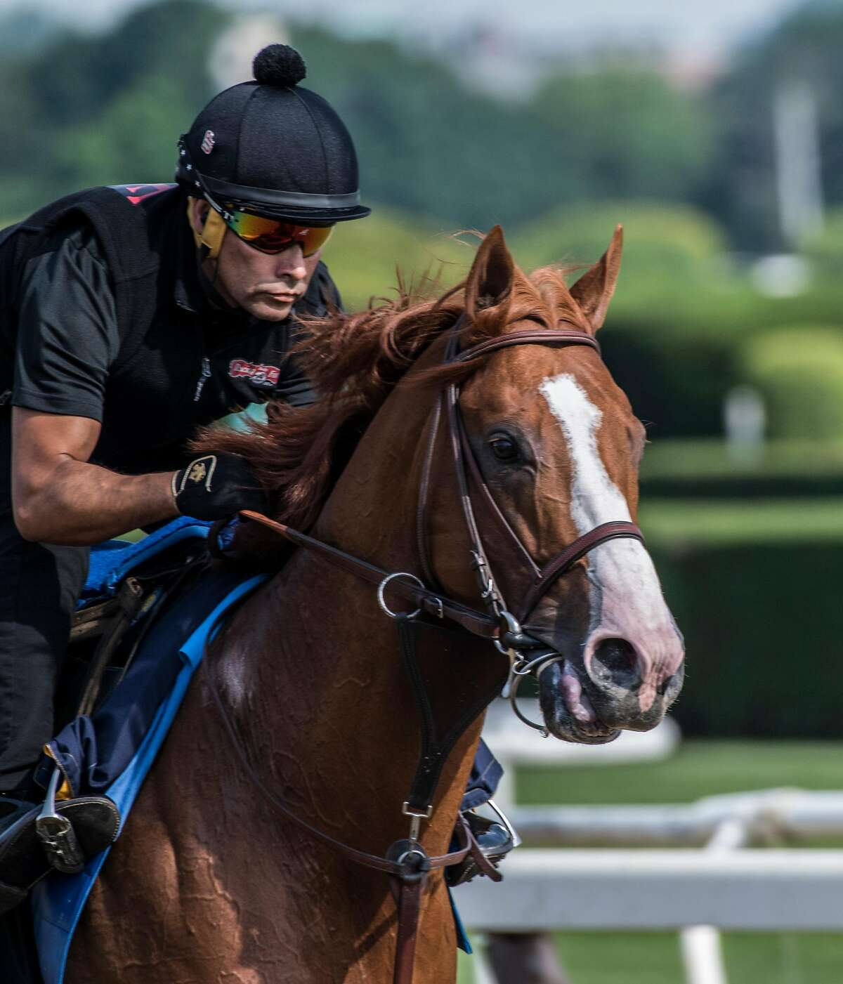 Kentucky Derby and Preakness winner Justify out for his morning exercise at Belmont Park Friday June 8, 2018, in Elmont, N.Y. (Skip Dickstein/Times Union)