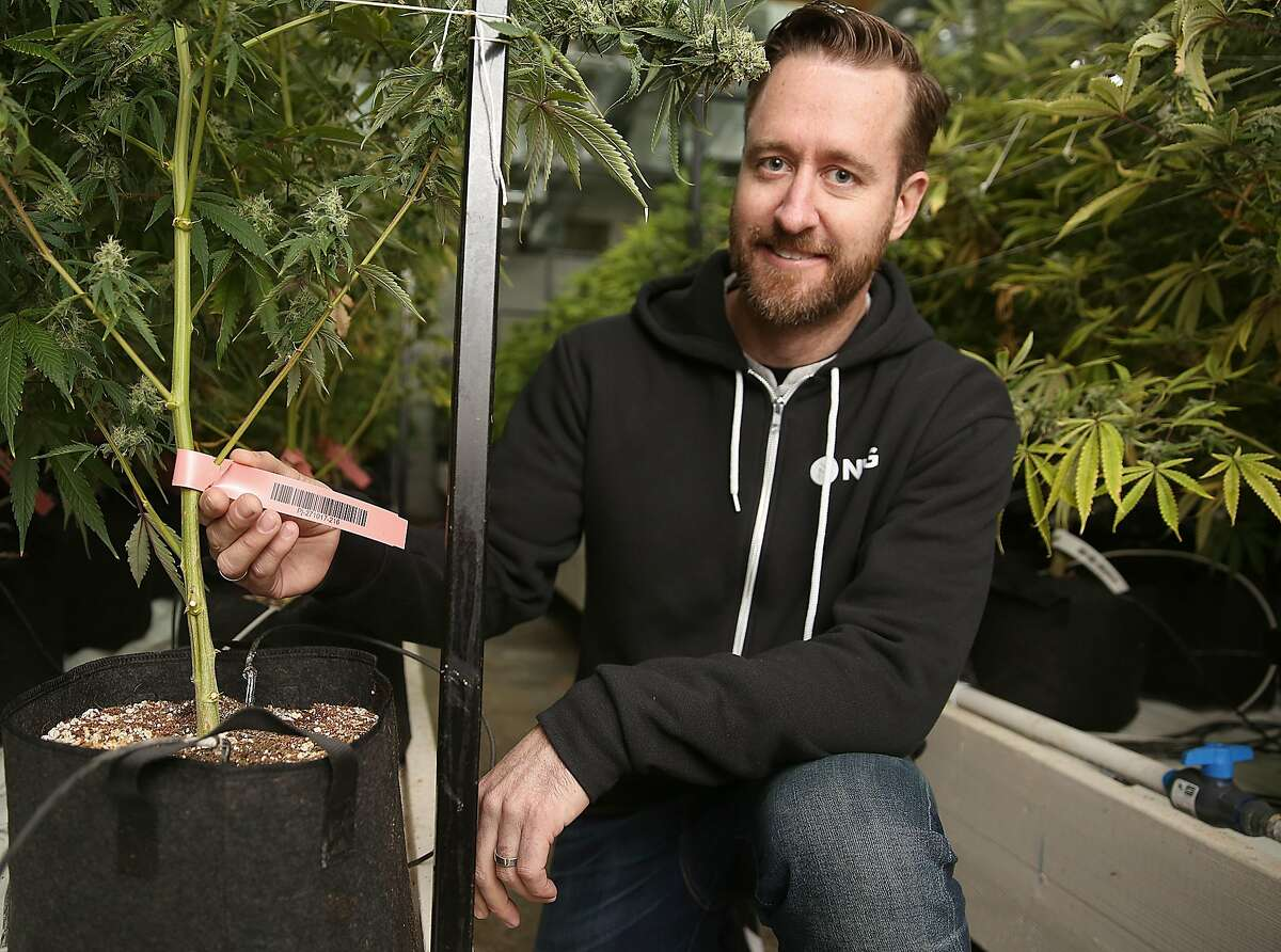 John Oram, the CEO of Bloom Innovations, a horticulture consulting and management firm shows coding where plants are tracked from seed to product on Wednesday, December 13, 2017, in Oakland, CA.