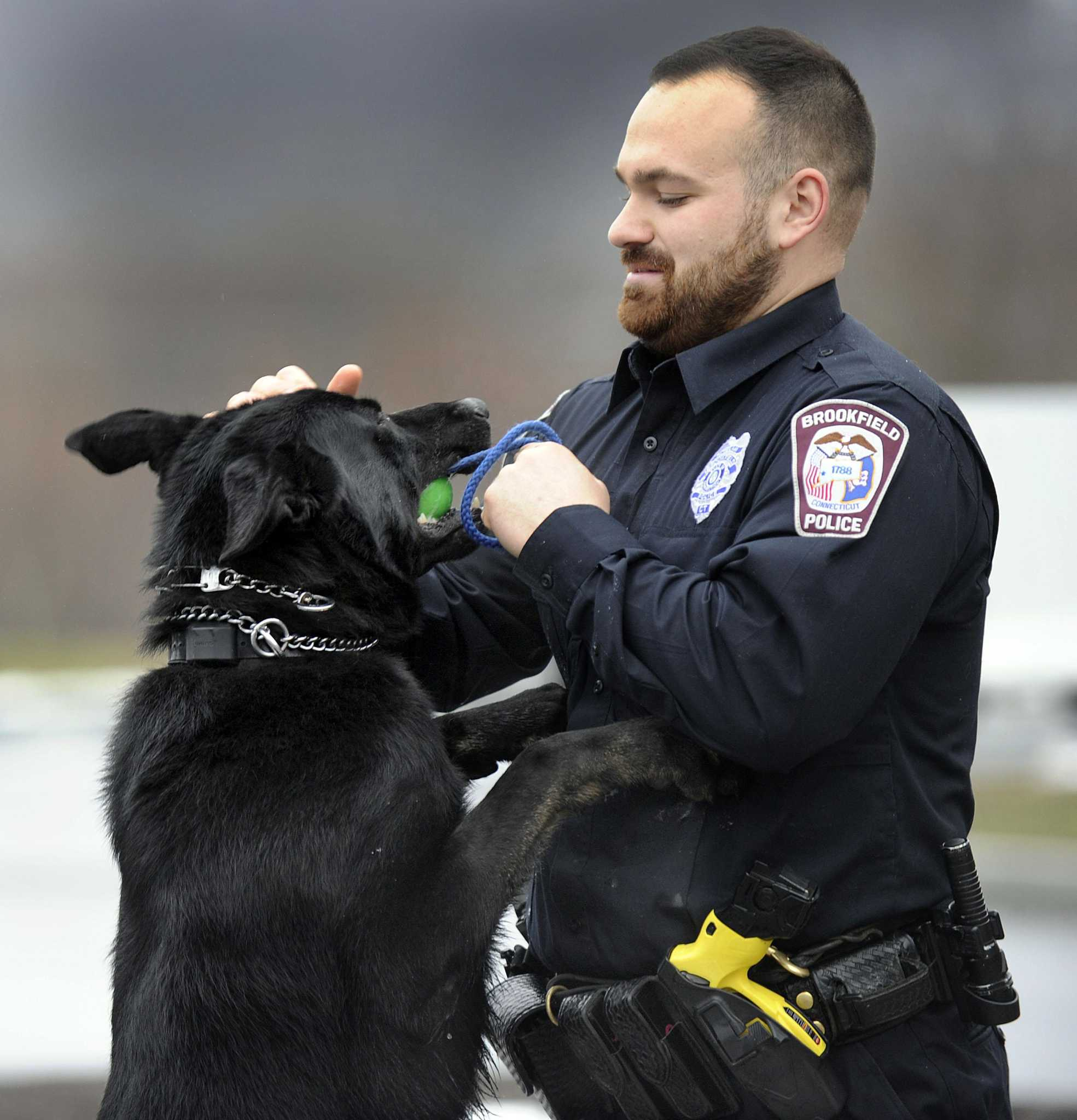 Brookfield PD's newest K-9 gets body armor - Connecticut Post