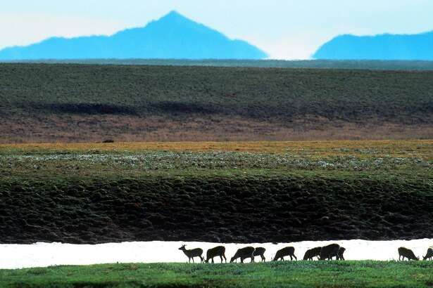 Since 1977, with the completion of the Trans-Alaska Pipeline, wildlife at nearby Prudhoe Bay has co-existed with the oil industry, creating jarring scenes of caribou herds migrating past drilling rigs and grizzly bears ambling across the Haul Road that connects the oil fields to civilization. A band of Caribou is shown crossing the Canning River in the refuge.