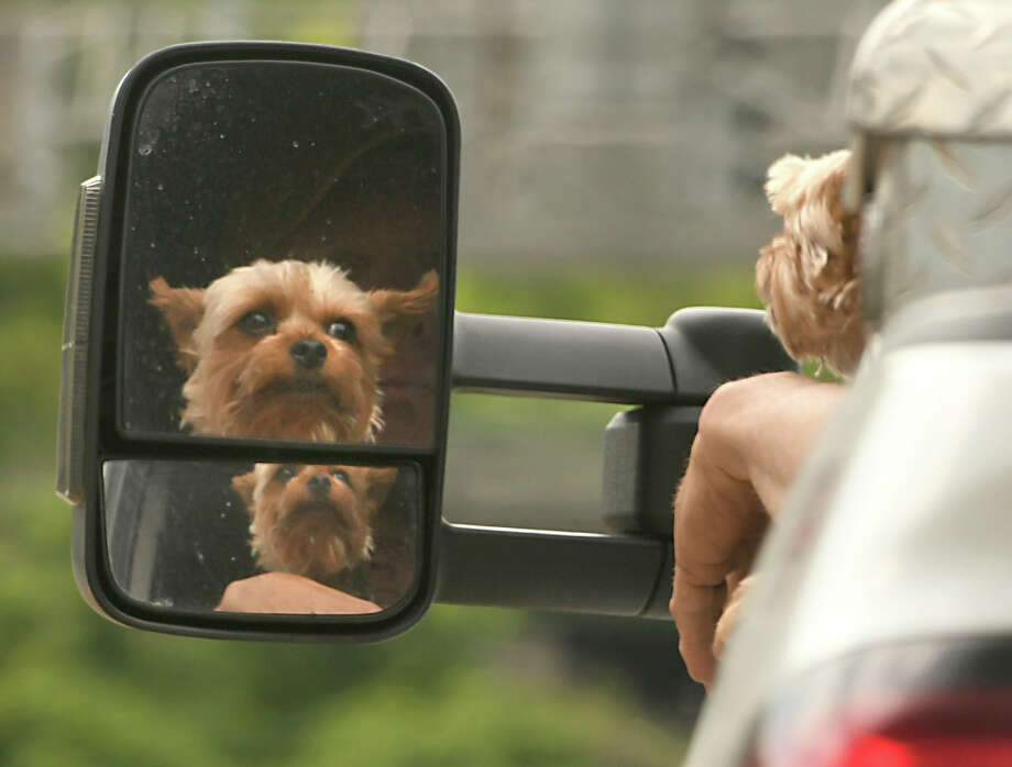 A dog is seen in the side view mirror of a truck on Rt. 146 on a beautiful day Thursday, June 8, 2018 in Clifton Park, N.Y. (Lori Van Buren/Times Union) Photo: Lori Van Buren