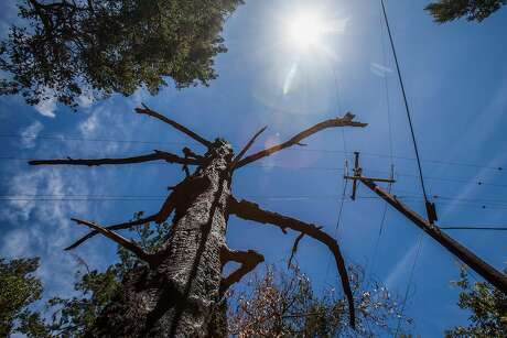 A burned out tree stands near one of many replaced PG&E power poles along Mount Veeder Rd., Saturday 09  June 2018 in Napa, CA. (Peter DaSilva Special to the Chronicle)