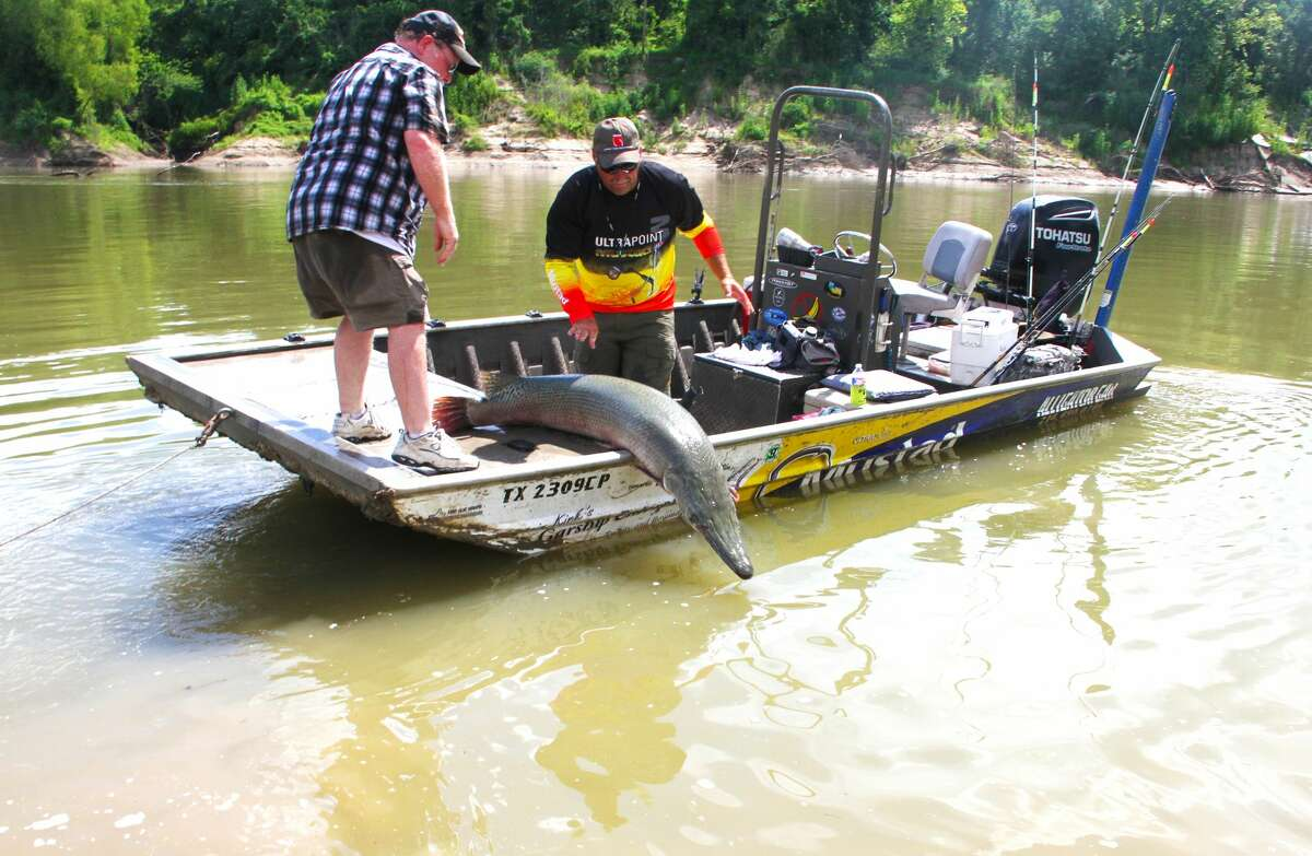 Fishing guide Kirk Kirkland, who specializes in targeting alligator gar, prepares to release a 115-pounder landed from the Trinity River. Catch-and-release fishing for the huge gar, unheard of barely two decades ago, is standard for many of today's gar anglers.