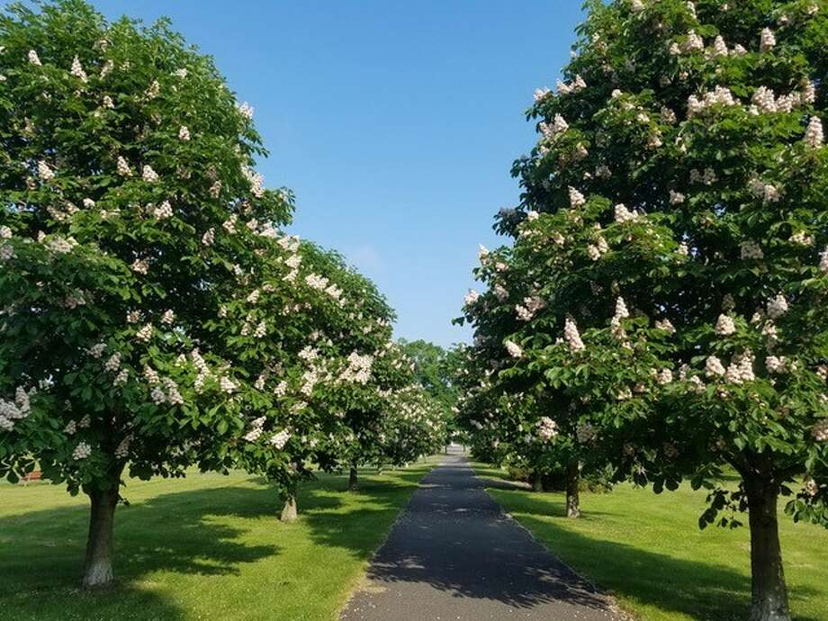 This was the beauty of nature that could be seen at the Schuyler Flatts in Watervliet over the Memorial Day Weekend. It was captured by Lynn Bessette of Troy while out for her morning walk with her dog, Chuch. (Lynn Bessette)