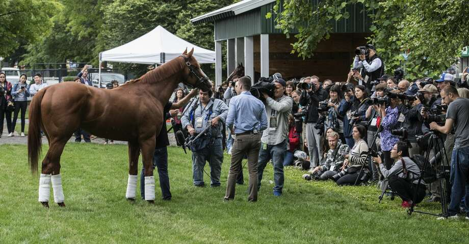 Justify gets his day with the media Sunday June 10, 2018 after he won the Triple Crown by winning the 150th running of The Belmont Stakes at Belmont Park  in Elmont, N.Y.  Justify is being held by trainer Bob Baffert.  (Skip Dickstein/Times Union) Photo: SKIP DICKSTEIN/Albany Times Union