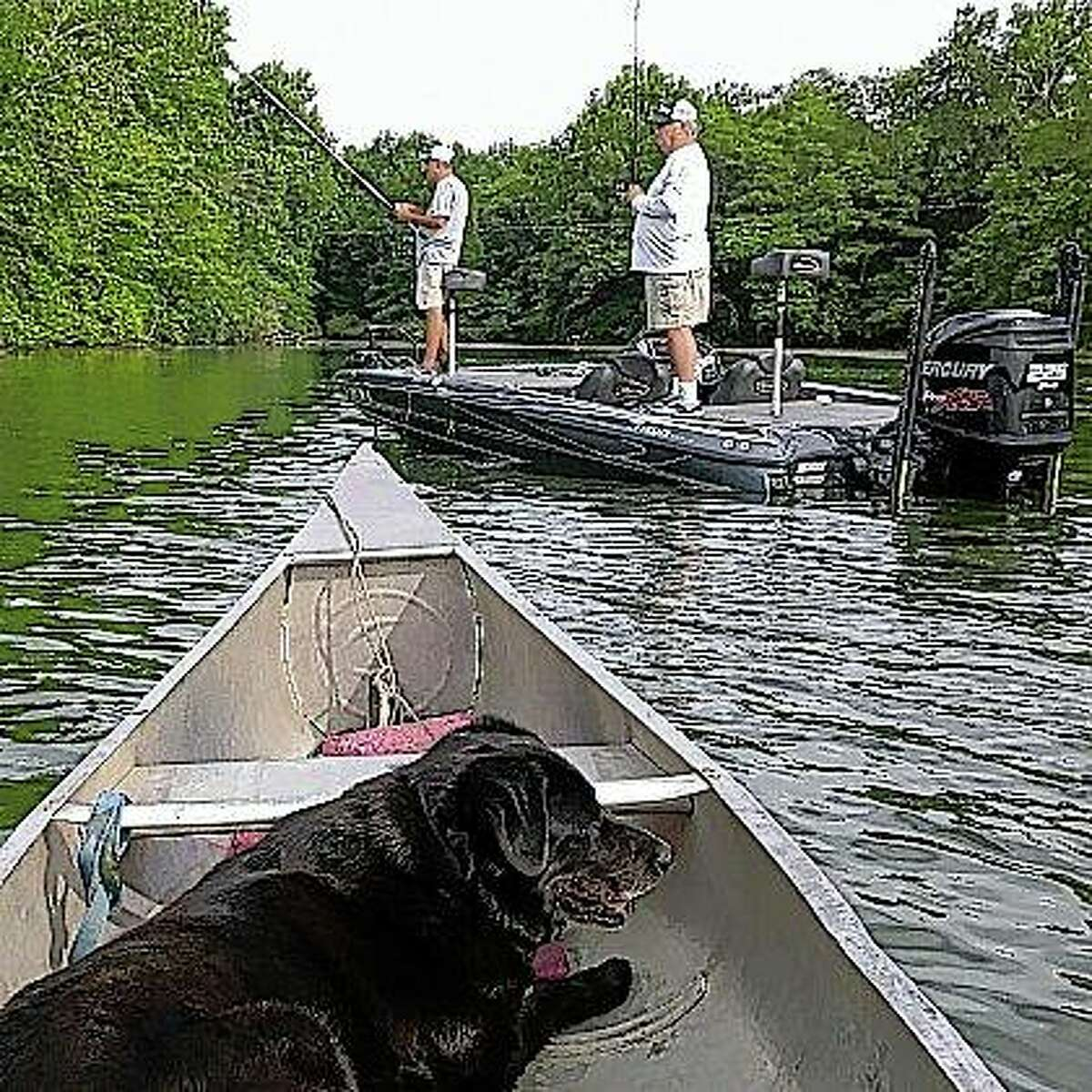 Angelo the dog looks on as two Springfield fishermen check out Lake Jacksonville hot spots ahead of an upcoming tournament.