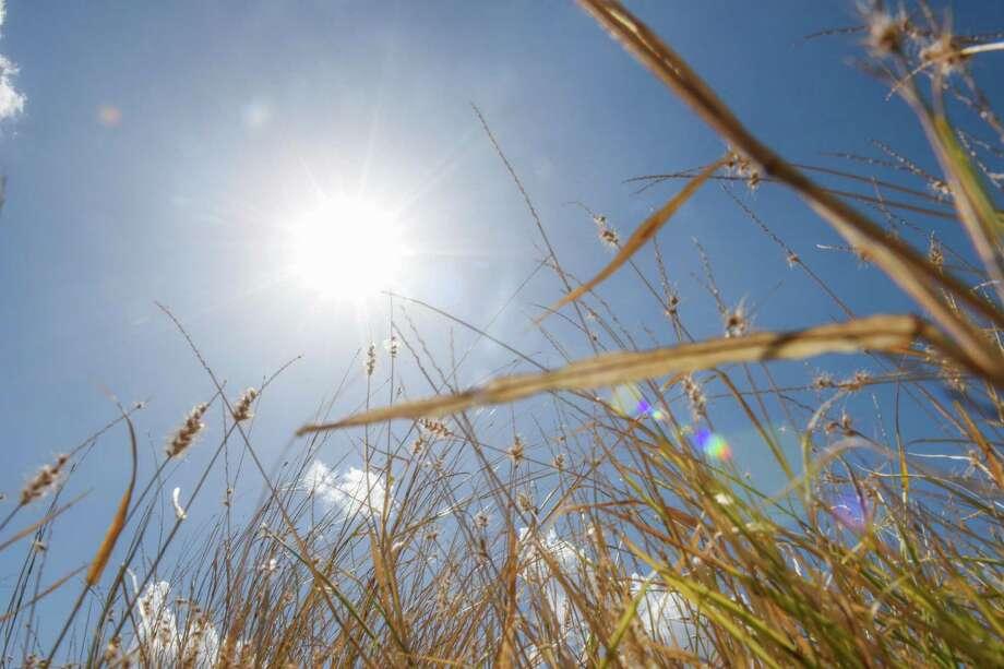 Pasto seco cubre una de las aceras sobre Shiloh Drive, el sábado. Las lluvias de este año se encuentran por debajo del promedio. Photo: Danny Zaragoza /Laredo Morning Times