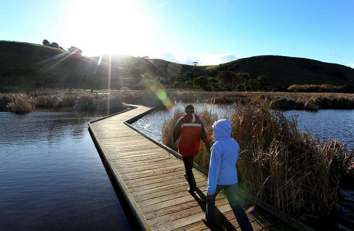 Visitors walk on a series of raised boardwalks through the marshes at Coyote Hills Regional Park, which located next to the 12-mile Alameda Creek Trail in Fremont. The Park runs west alongside Alameda Creek from the mouth of Niles Canyon in southern Alameda County to Coyote Hills Regional Park and the San Francisco Bay. The Park is approximately 1,000 acres renown for its bird-filled marshes, a Tuibun Indian village, and an array of hills, Indian shell mounds and Bay views. Thursday Jan 10, 2013, in Fremont California.