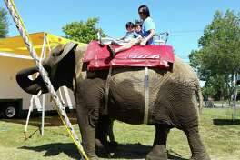 One of Commerford's elephants at the 2015 Goshen Fair.