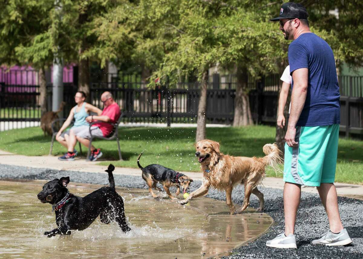 David Camp watches his dog, Lewis, play in the water at Johnny Steele Dog Park on Monday, June 11, 2018, in Houston. The park, which was heavily damaged by Hurricane Harvey, reopened for the first time since the storm.